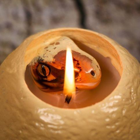 Kuoriutuva Dinosaurus Kynttilä
