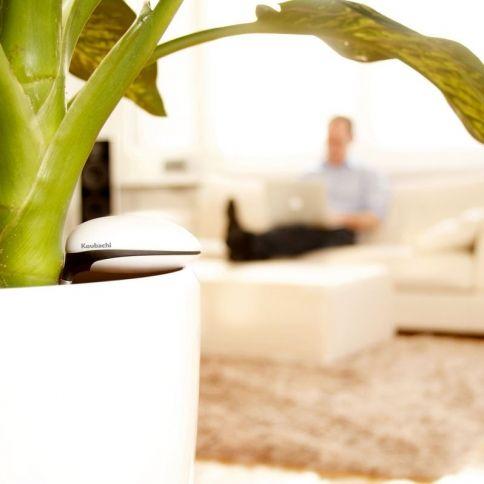 Koubachi wifi plant sensor indoor - Monitor your indoor plants with the koubashi wi fi sensor ...