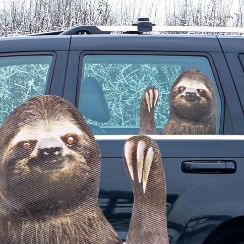 Ride With Sloth Autotarra
