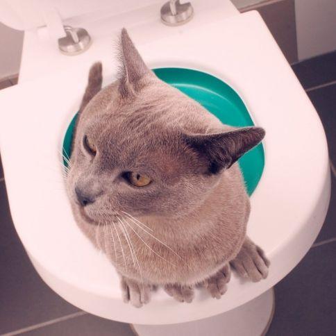 Kissan Pissa Haisee